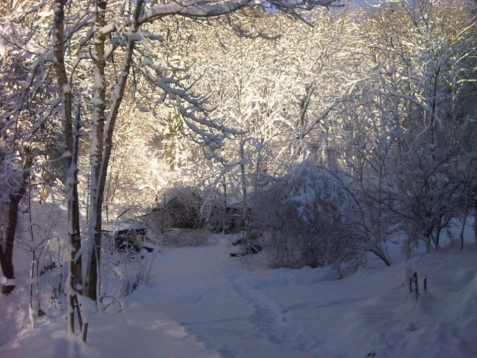 wintertrees